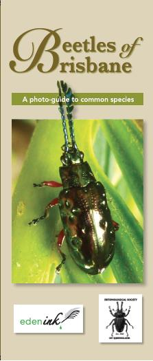 beetle brochure